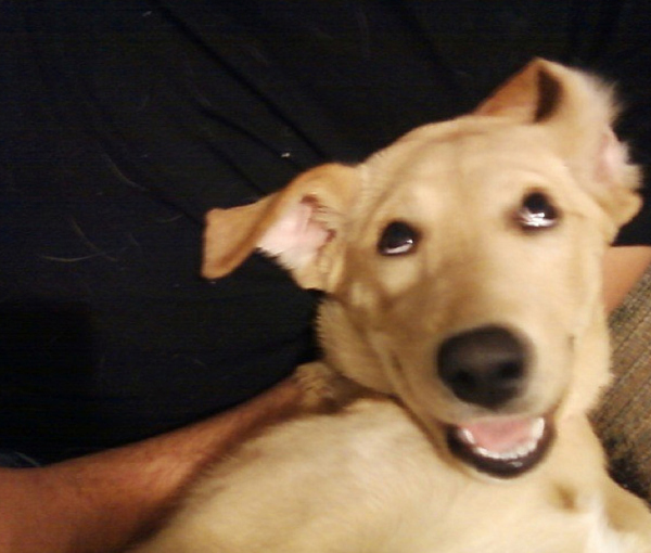 Funny Picture Of Dog Smiling