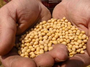 U.S. Taxpayers Footing Bill That Promotes Monsanto Abroad
