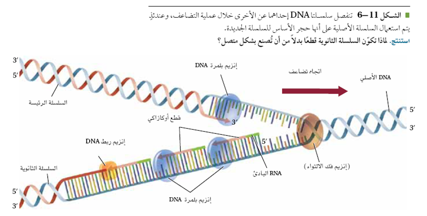 Chapter 12 dna worksheet structure of dna and replication