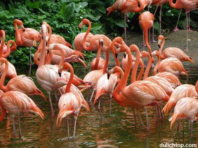 Tour Du Lịch Singapore: Sentosa-Vườn Chim Jurong Vuon+chim+jurong-bird-park-singapore2