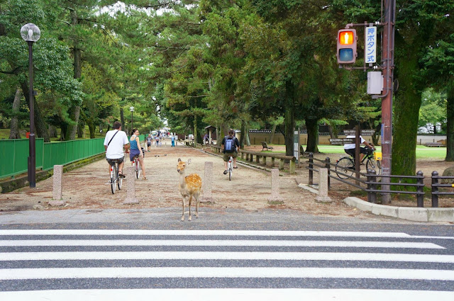 Deer waiting at the traffic lights (6 pics), funny deer pics, deer at Nara japan, deer cross road pics