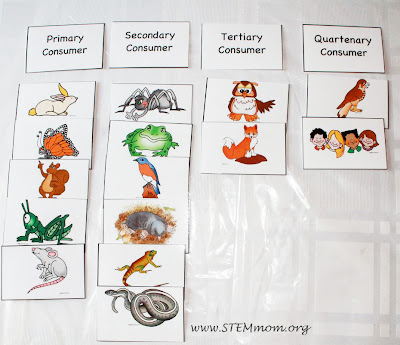 Types of Consumers: Free Activity Cards from STEMmom.org