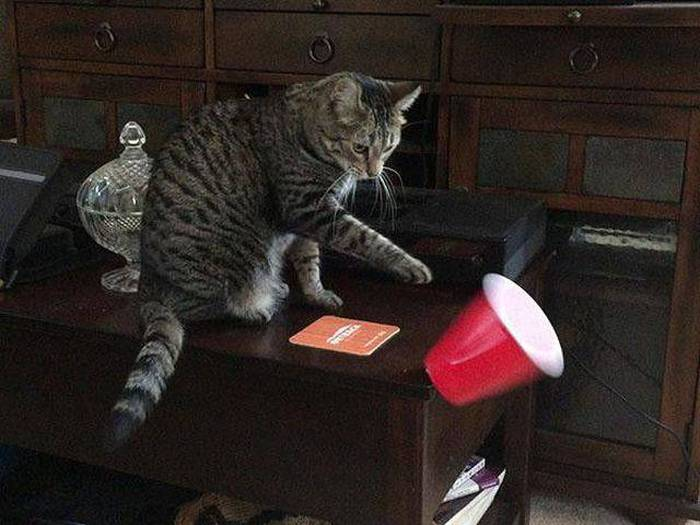 Funny cats - part 169, funny cat photos, cat pictures, adorable cat picture