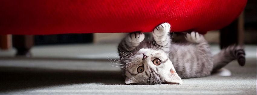 Cute little cat facebook cover