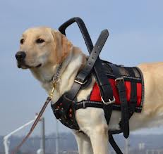 guide dog and service dog act