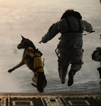 Dog Jumps Off Bed