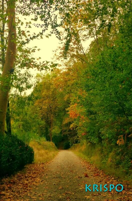 arboles y hojas en el monte en otoño