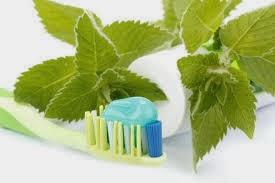 Curar desde la boca usos de la stevia - Currar desde casa ...