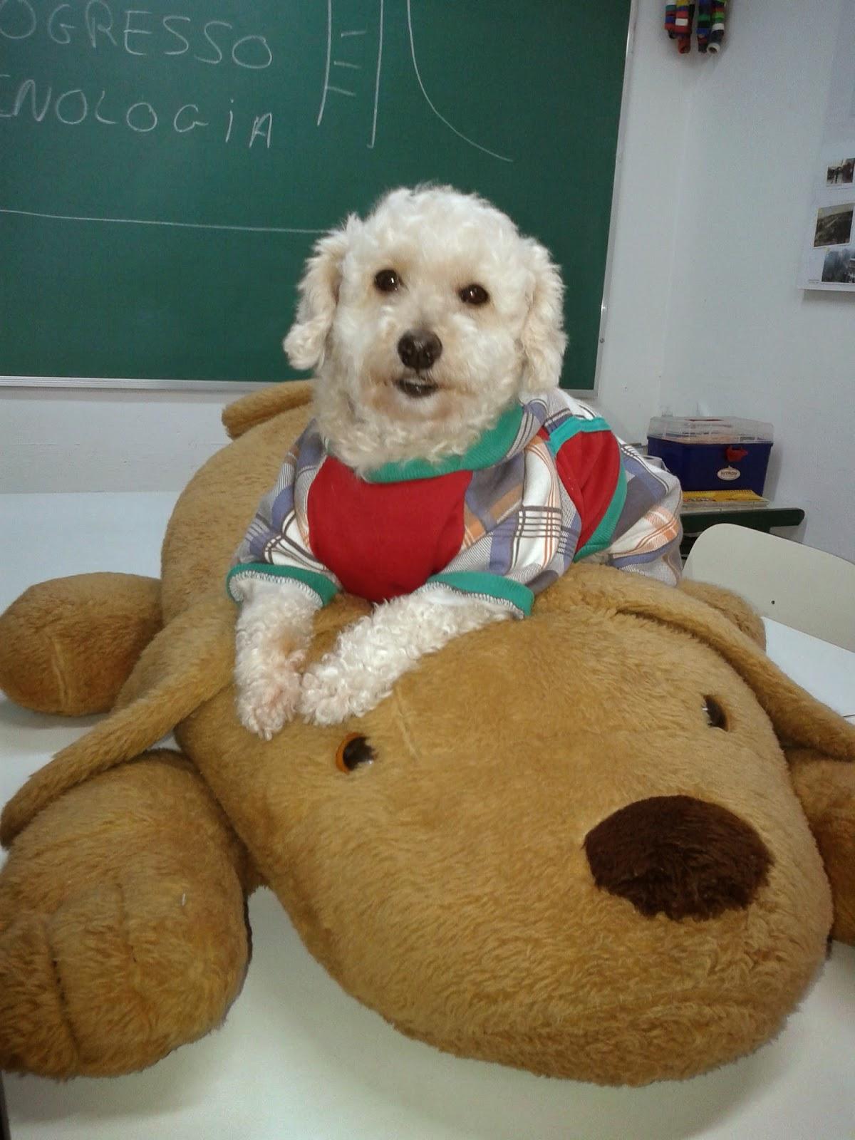CIEJA Campo Limpo: Projeto SAE Solidariedade Animal na Escola uma  #72401D 1200 1600