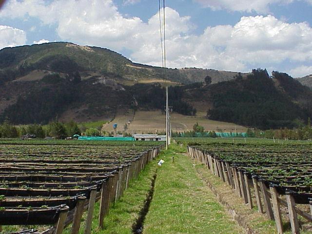 Cultivos hidroponicos for Imagenes de hidroponia