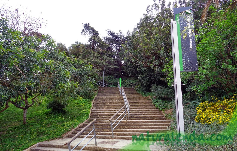 escaleras del jardin