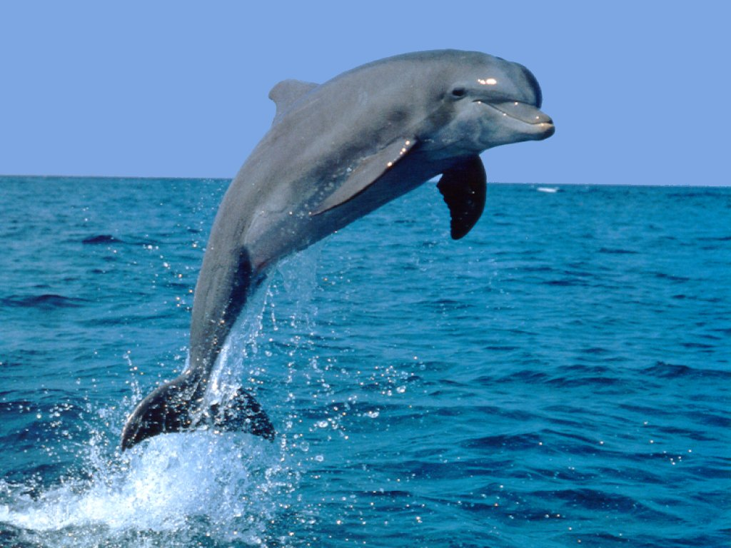 Dolphin friendly Animals | Fun Animals Wiki, Videos, Pictures, Stories