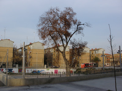 Laurel de la Cárcel de Torrero Zaragoza