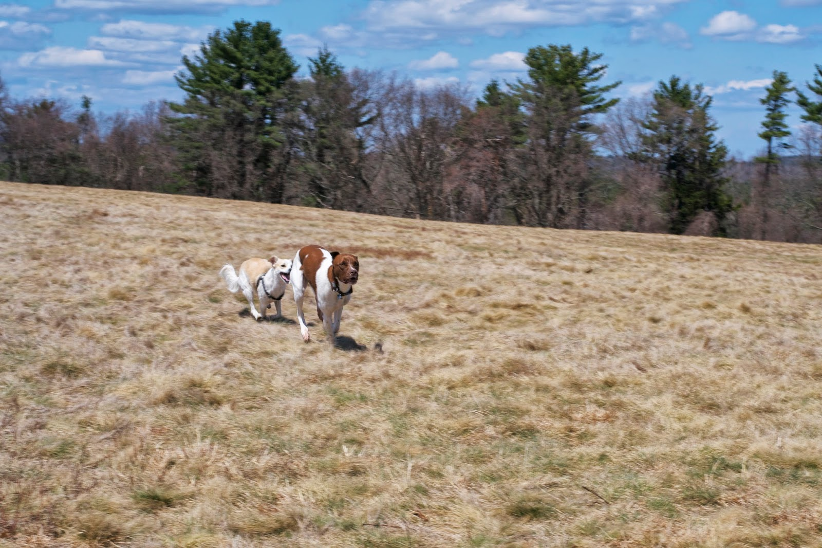 Happy dogs get a moment to run off leash.