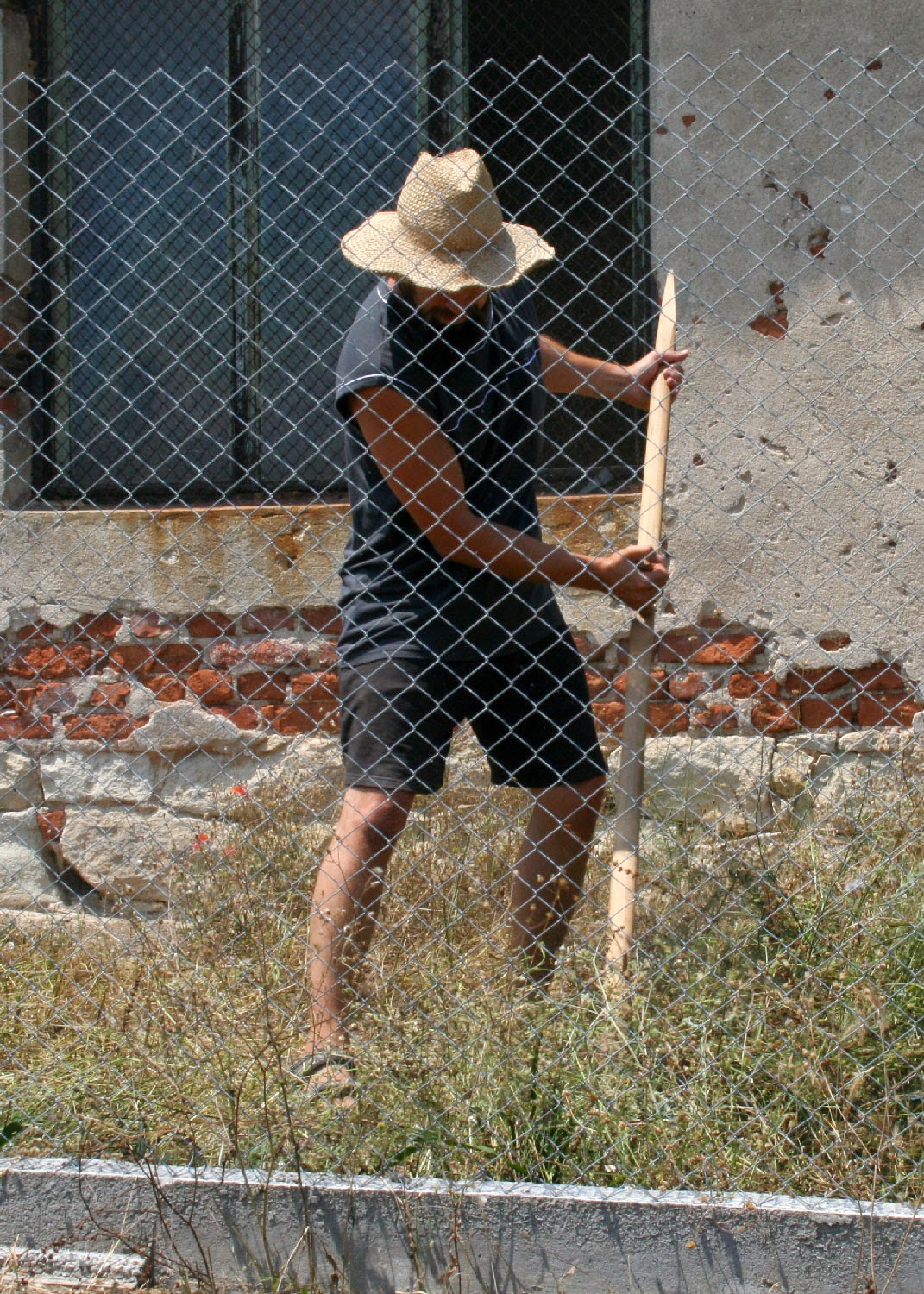 Scything in the enclosure