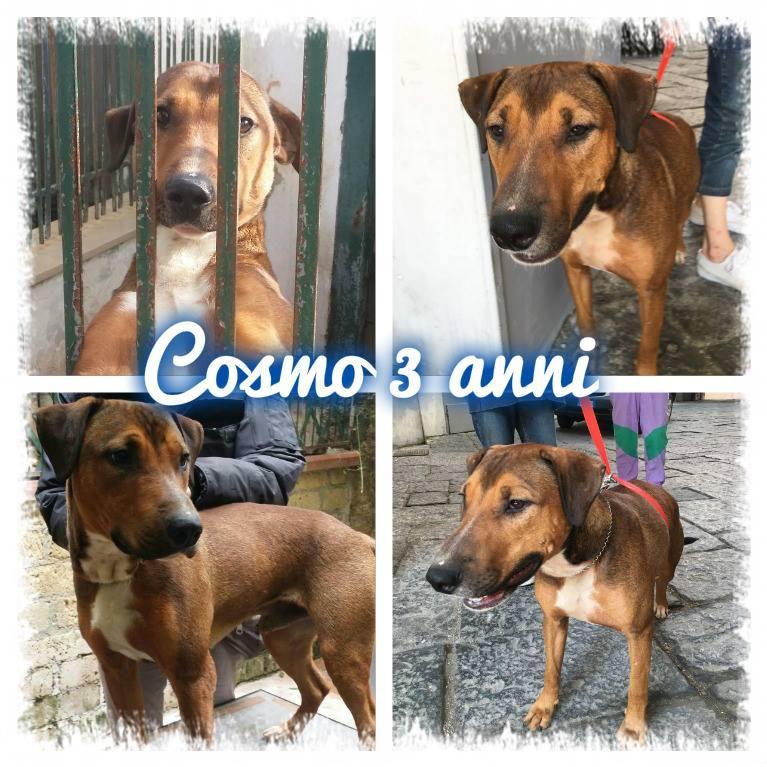 Cosmo 3 anni