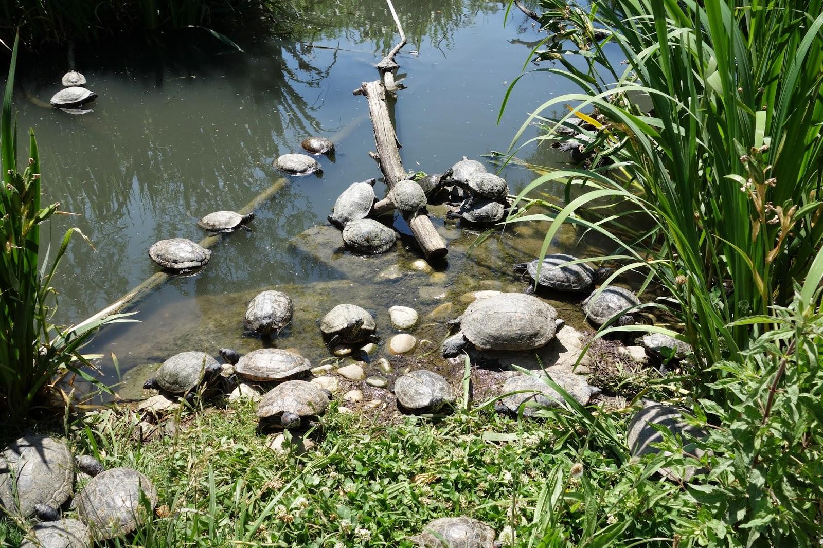 Парк Аистов - черепахи