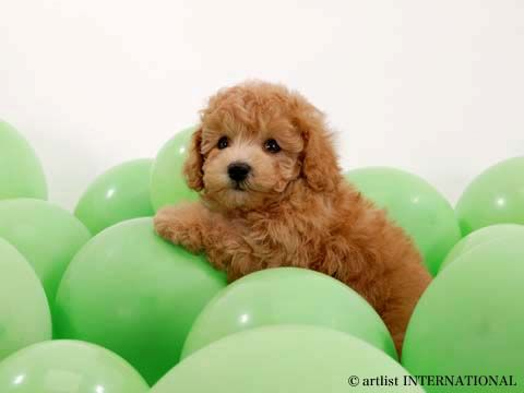 cute quotes about dogs. cute puppies and dogs