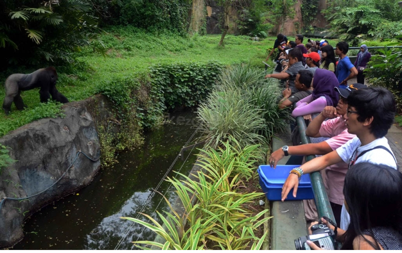 Tempat Wisata Di Daerah Jakarta  Ragunan