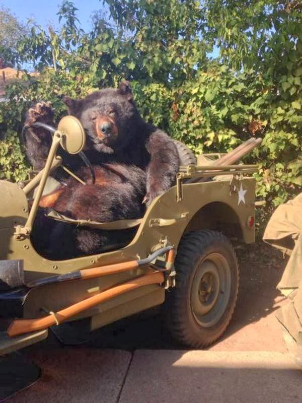 Funny animals of the week - 28 February 2014 (40 pics), bear sitting in a jeep
