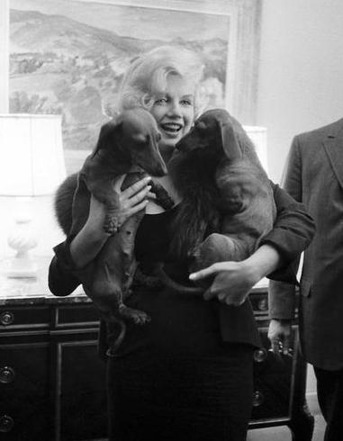"""En 1959, los dos Dachshund del embajador de Francia que le entregó  la Estrella de Cristal por el film """"El príncipe y la Corista""""."""