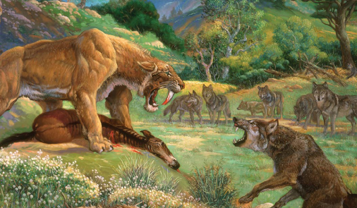 Sabertooth Tiger vs Bear http://www.spinserpent.com/2012/05/myths-realities-of-dire-wolves.html