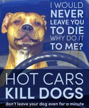 dog hot car, dogs in hot vehicle, dog in hot vehicle, dog in hot car