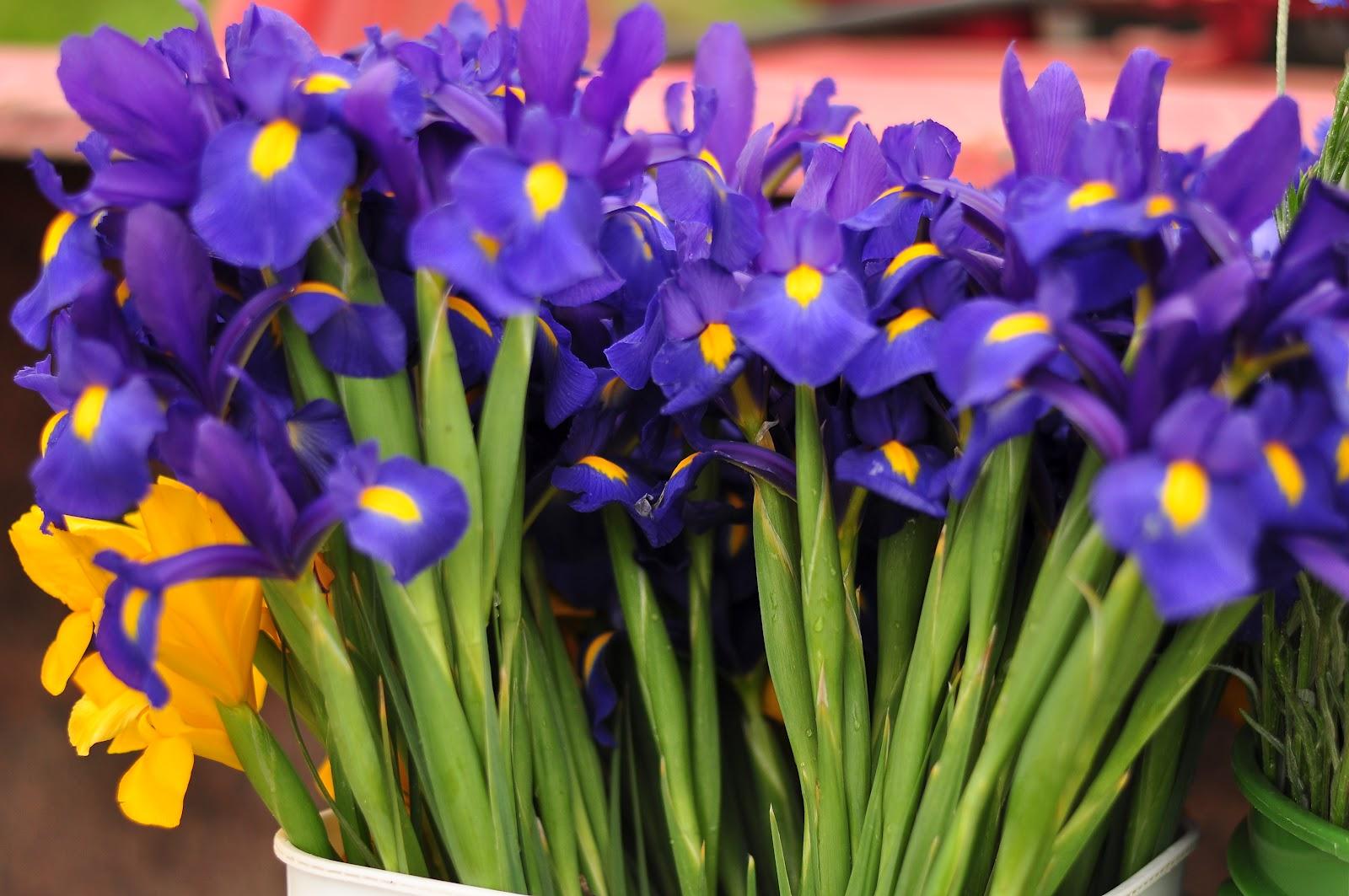 Blue Dragonfly Cut Flower Farm Spring Flowers