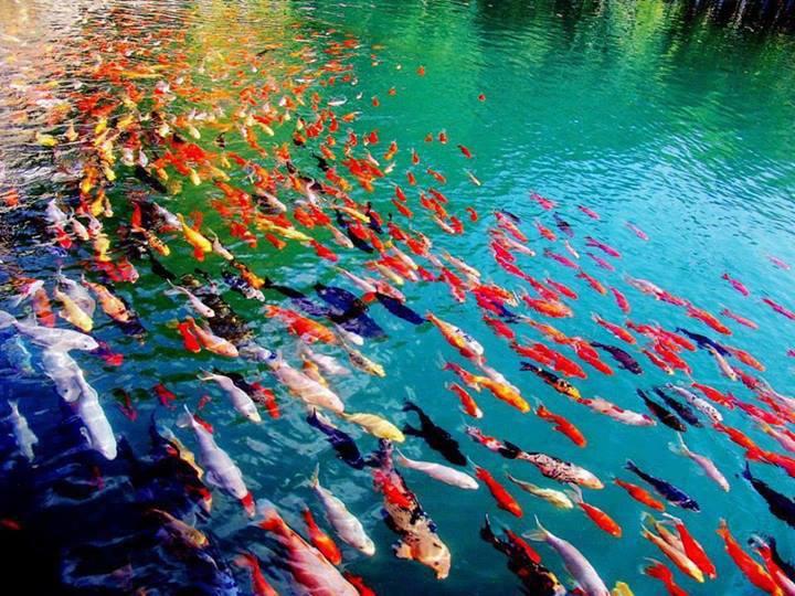 enteresan balık fotoğrafı