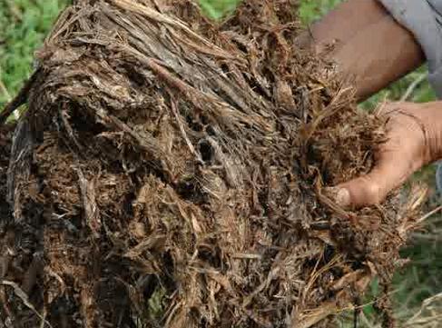 Membuat Pupuk Kompos dari Moretan