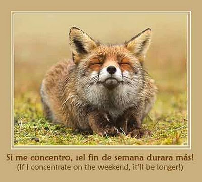 TGIF adorable Fox
