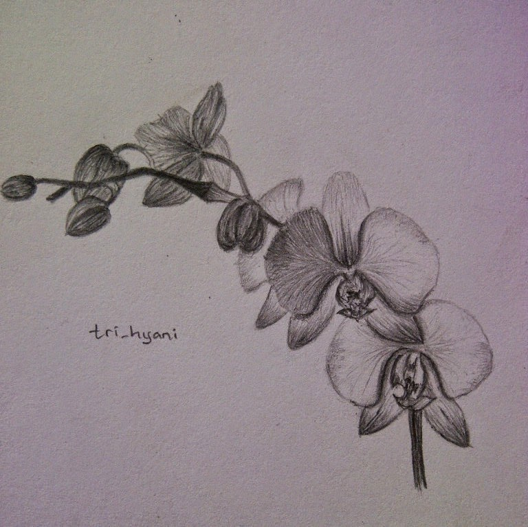 Sketsa Gambar Bunga Anggrek Dendrobium