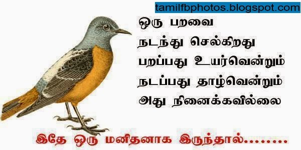 Bird - Life Quote in Tamil