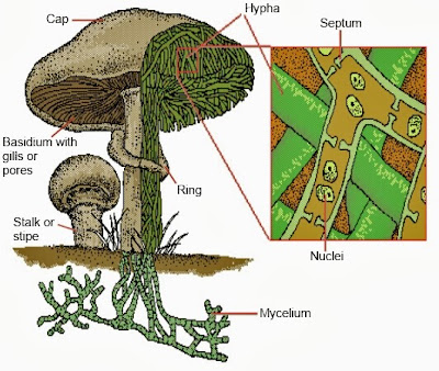 Parts Of A Mushroom Diagram besides Ferret Body Parts Diagram moreover 451172 All My Base Circles Reduced as well Wiring Diagram Pdf Free Download Get Image About additionally Planting Diagram For Trees. on labeled engine parts diagram