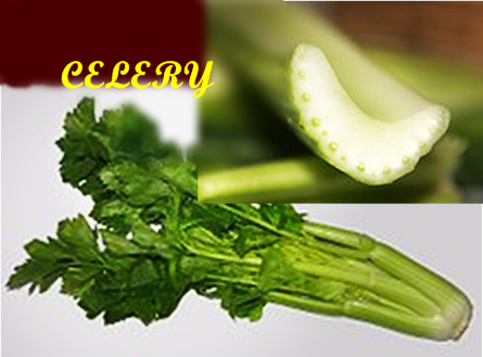 CELERY - Celery stimulates the major gland that releases sexual hormones, ...