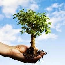 Guarda Civil Ambiental de Guarulhos atende denúncia sobre suposto corte ilegal de árvore