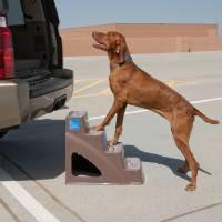 escadas para cães em carros