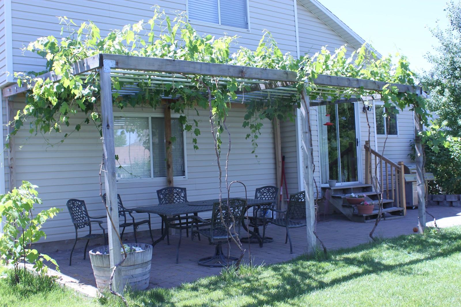 Навесы для винограда своими руками фото