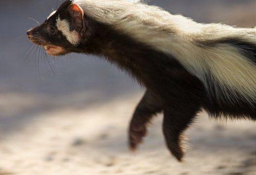 Подведены итоги наблюдения за фауной Африки с помощью фотоловушек