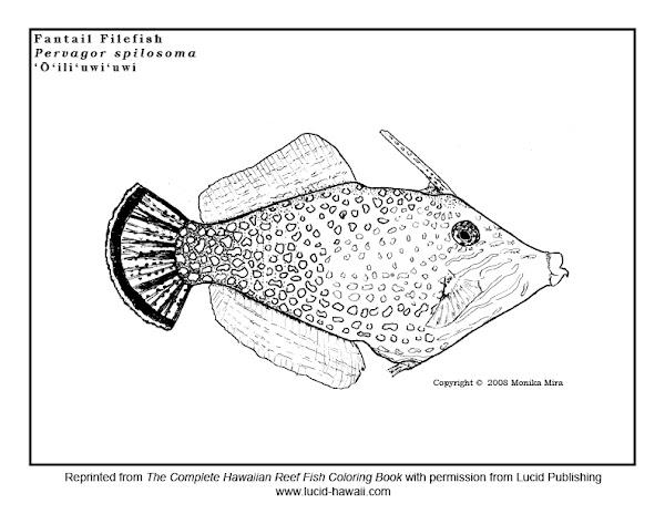 Hawaiian State Fish Coloring Page