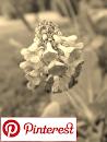 Mamman puutarha Pinterestissä