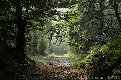 nature forêt route pavés chemin Fontainebleau Seine-et-Marne
