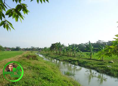 FOTO 3a - Sungai Ciasem sebelum dikeruk ... Lokasi di dekat sawah admin
