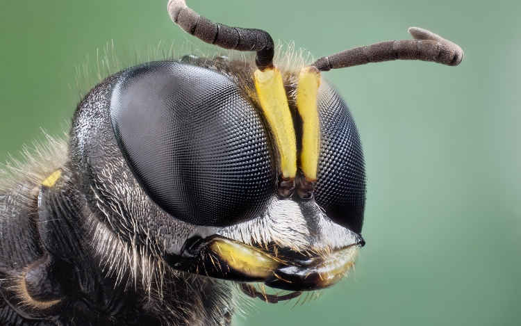 insects eyes under the microscope