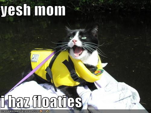 Floaties lolcat