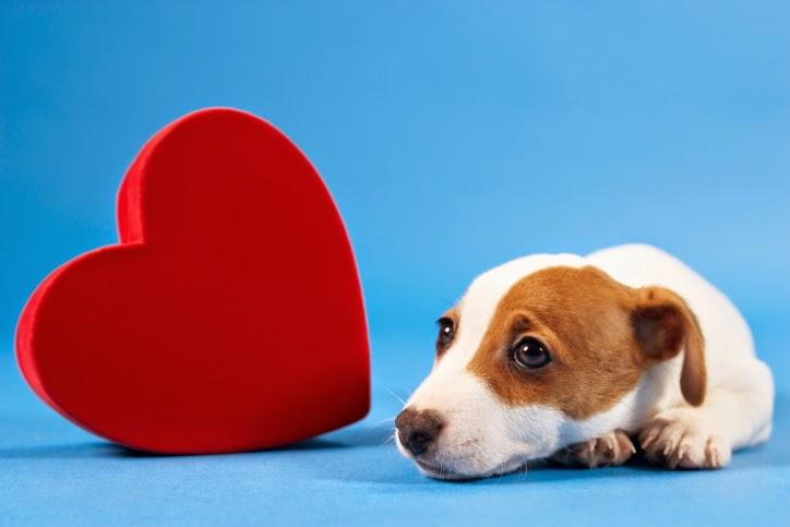 Cachorro con corazón