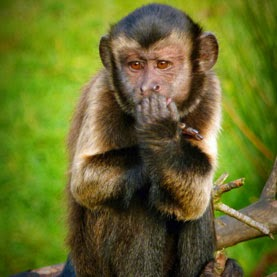 Monkeys Stay Away from Mean People
