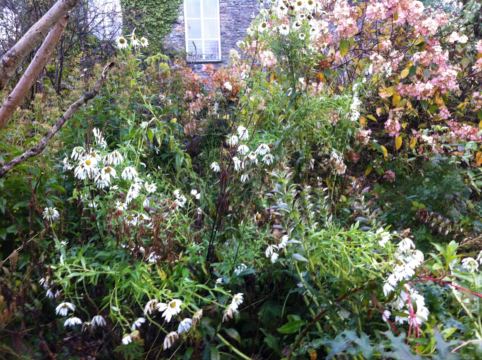 Backyard Flower Farmer :  garden  Common Farm Flowers  The Flower Farmer  British flowers by