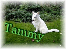 TAMMY