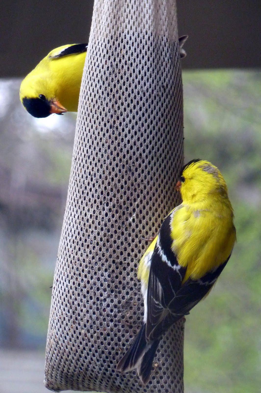 red tutorial easy diy feeders yellow feeder bird nine